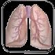 مجاری تنفسی